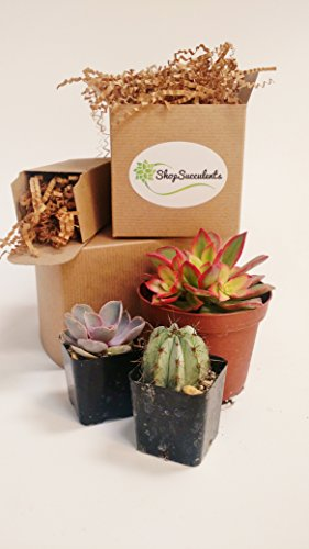 128-Beautiful-Succulent-Wedding-Favors-by-Shop-Succulents-0-0