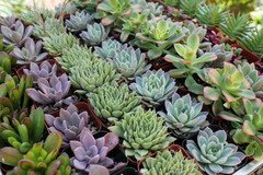 128-Beautiful-Succulent-Wedding-Favors-by-Shop-Succulents-0-1