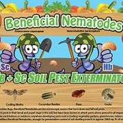 250-Million-Live-Beneficial-Nematodes-Hb-Sc-Kills-Over-200-Different-Species-of-Soil-Dwelling-and-Wood-Boring-Insects-0