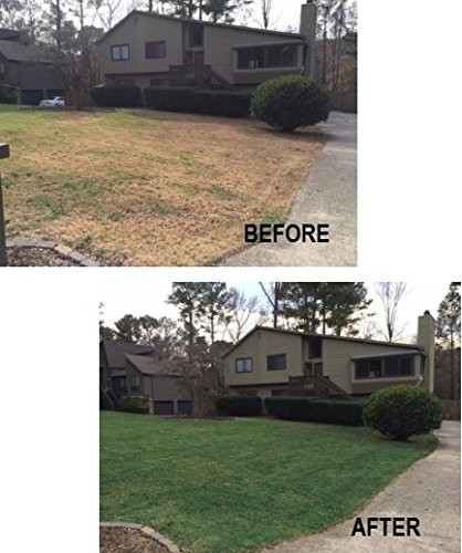 4000-Sq-Feet-4Ever-Green-Grass-and-Turf-Paint-0-1