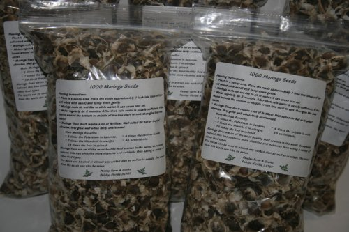 5000-Moringa-Seeds-Fresh-seeds-with-great-germination-rate-Distributed-by-Paisley-Farm-FL-0-0