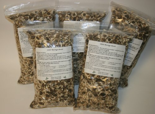 5000-Moringa-Seeds-Fresh-seeds-with-great-germination-rate-Distributed-by-Paisley-Farm-FL-0