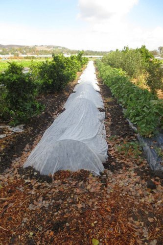 Agfabric-30-Garden-FabricRow-Cover-for-Seed-Germination-Insect-Barrier-and-Summer-Shading-0-0