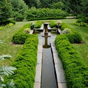 American-Boxwood-Lot-of-10-plants-in-quart-containers-Traditional-evergreen-hedge-0-0
