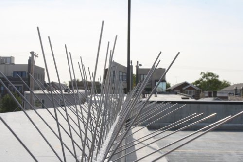 Bird-X-Stainless-Steel-Bird-Spikes-Covers-100-feet-0-0