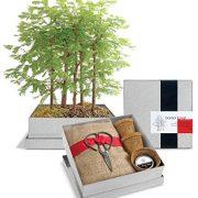 Dawn-Redwood-Forest-Bonsai-Box-0