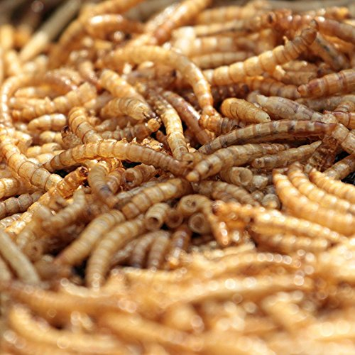 MBTP-Bulk-Dried-Mealworms-Treats-for-Chickens-Wild-Birds-0-0