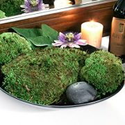 SuperMoss-Royal-Pool-Moss-Preserved-0-0