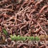 Worm-Factory-360-Composting-Bin-Terracotta-With-1000-Live-Composting-Worms-By-Worms-Etc-0-1