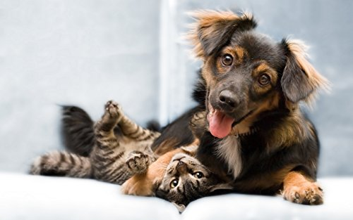 BEST-PET-SUPPLIES-LLC-cat-calmer-products-PET-RELAXANT-FOR-DOGS-AND-CATS-CALM-AND-RELAX-YOUR-PET-CHEWABLE-cat-calming-products-180-Chews-2-Bottle-0-1